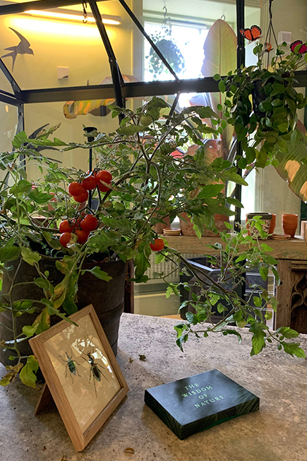 Use.Space greenhouse interior