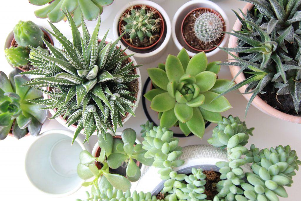 Green, succulent plants