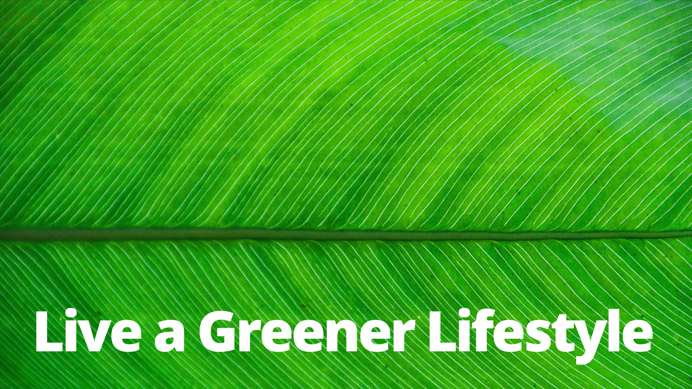 Eco-friendly, environment, sustainability